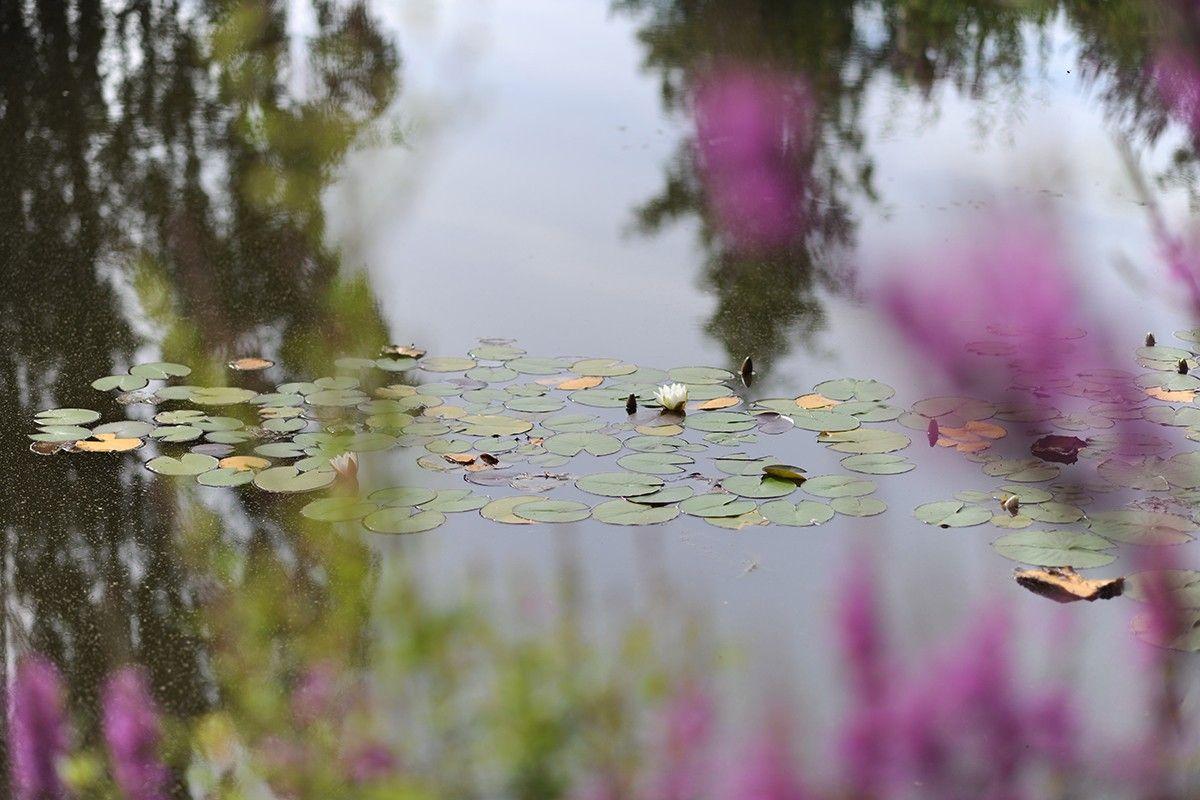 Restorative-Gardens-Matara