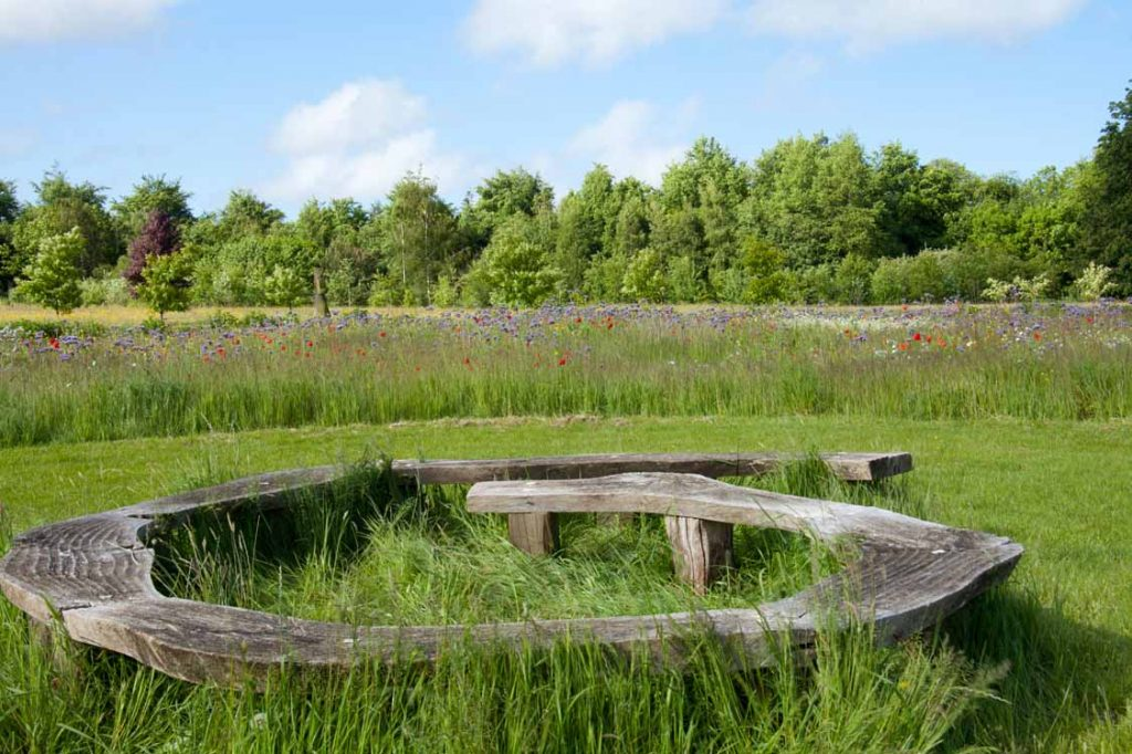 Wildflower-Meadow-Matara