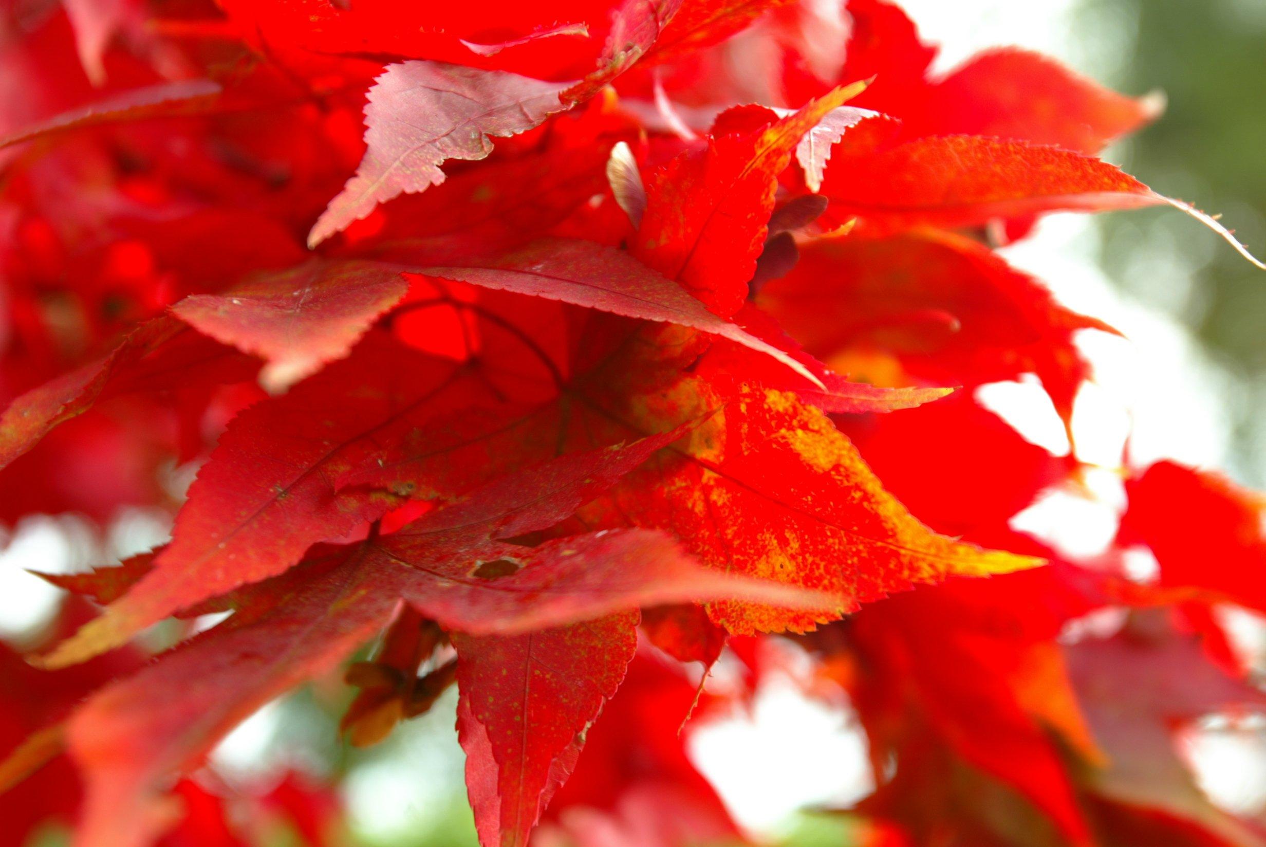 seasons-Matara