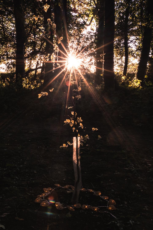 tree-planting-Matara